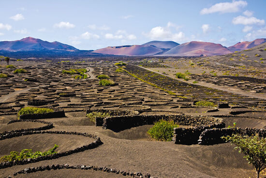 The extraordinary vineyard landscape at La Geria on the volcanic island of Lanzarote (photo © laceo / dreamstime.com).