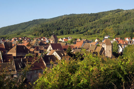 Riquewihr is in a small depression formed by a stream called Le Sembach which flows down from the forested Vosges hills towards the plain of Alsace (photo © hidden europe).