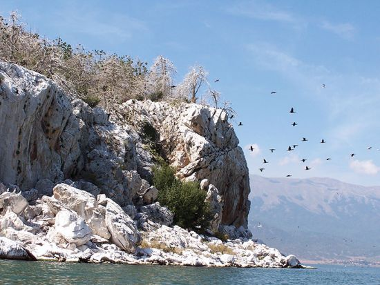 Flocks of lake birds swoop down from their protected dominion, the white cli!s of Golem Grad (photo © Christopher Deliso).