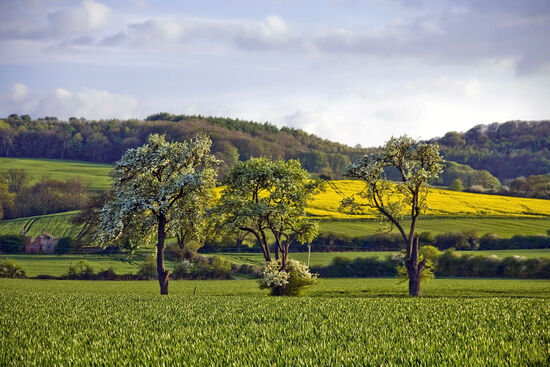 The velvety landscapes of the Cotswolds in summer have long been a magnet for poets and writers (photo © Davidmartyn / dreamstime.com).