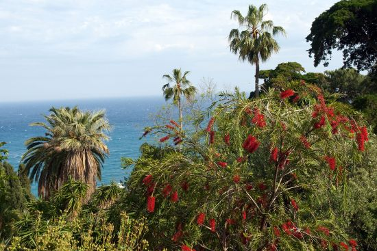 The Giardini Botanici Hanbury at La Mortola in Liguria is a possible future UNESCO World Heritage Site (photo © hidden europe).
