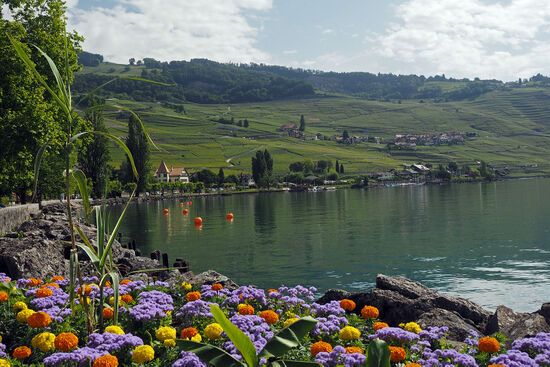 The Lavaux vineyards on the shore of Lake Geneva, viewed from the lakeside promenade at Cully (photo © hidden europe).