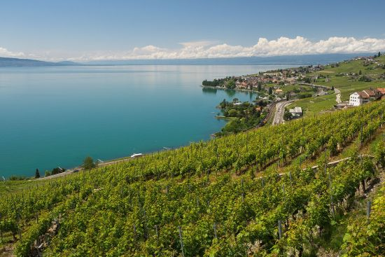 The Lavaux vineyards and Lake Geneva (photo © hidden europe).